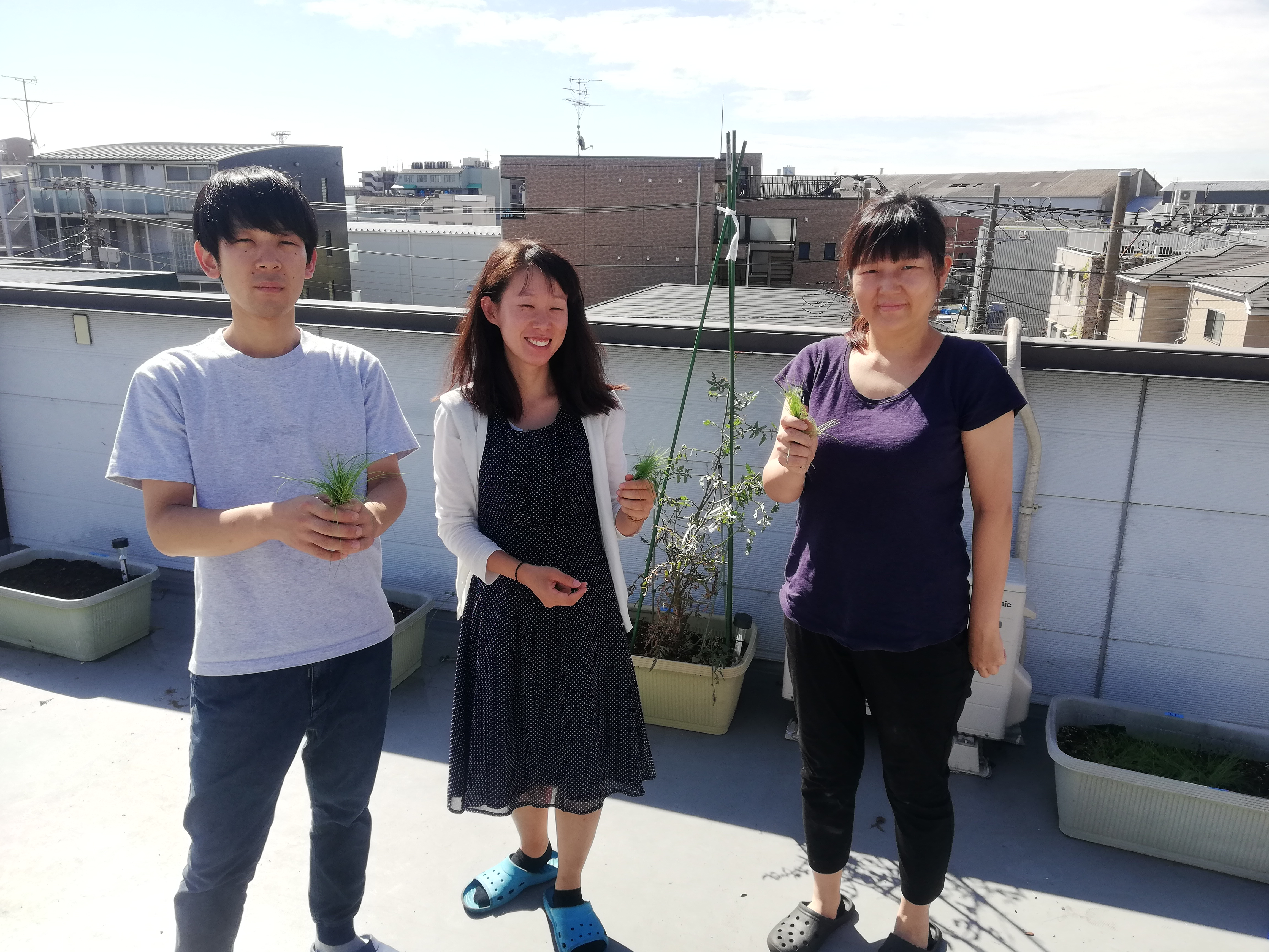 屋上菜園で種まき